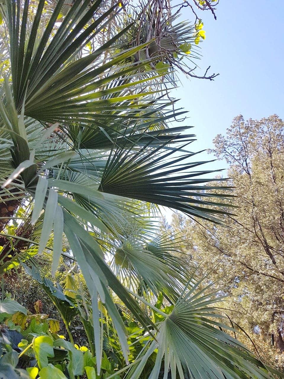 Botanische tuinen Montjuïc